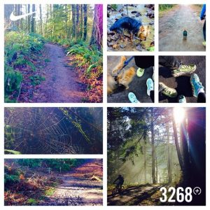 a collage of photos taken on the trails in Forest Park; Portland, OR