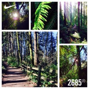 a collage of photographs taken during a run on a sunny day in Forest Park; Portland, Oregon